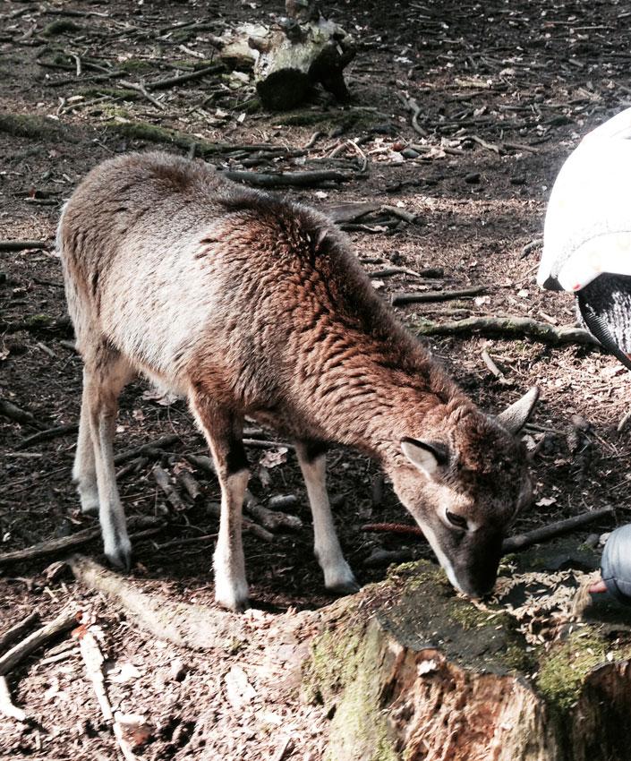 Tier füttern, spiele und die Greifvögel entdecken im Wildpark Poing.