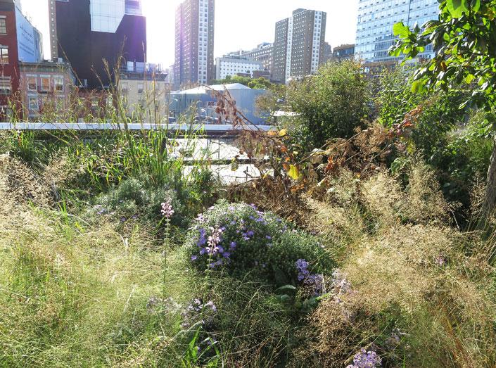 Highline-4