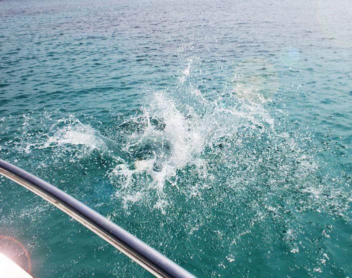 Menorcas Buchten und das türkisfarbene Meer