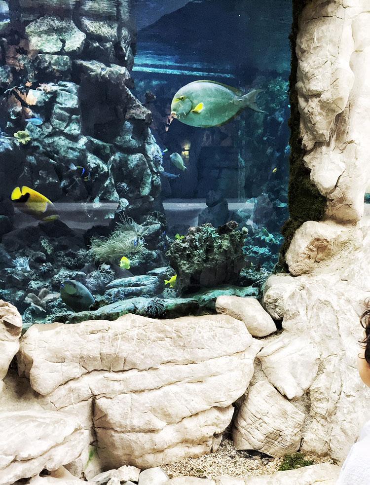 Aquarium-Stanglwirt