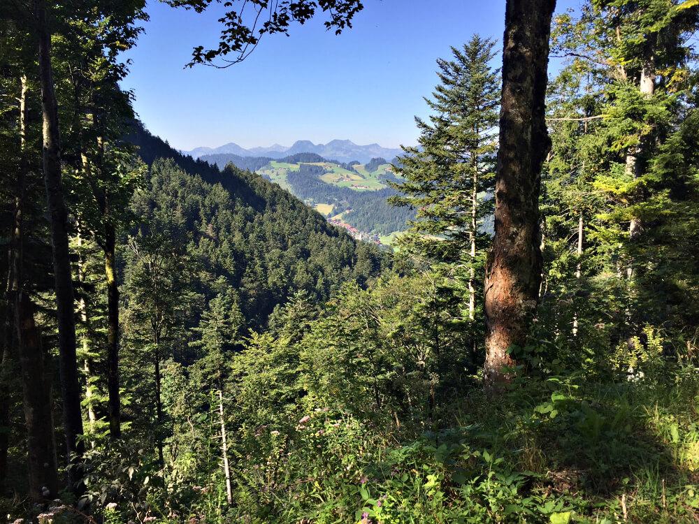 priener_huette-forstweg-1